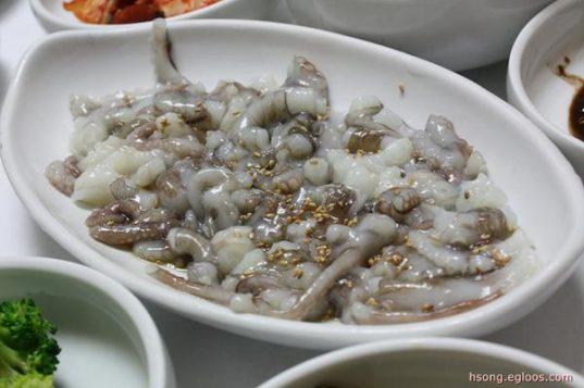 live-octopus