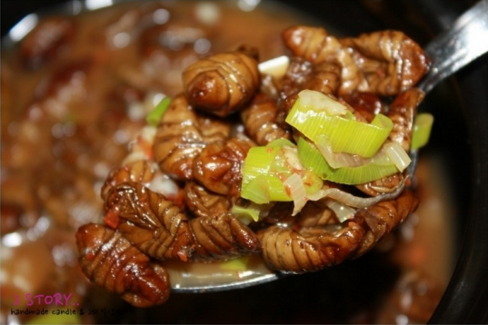 silkworm-larvae-2